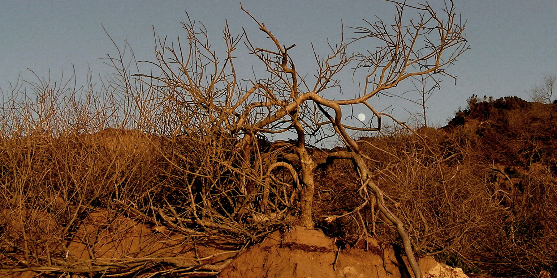 Is it Dry Trees or Dead Trees?