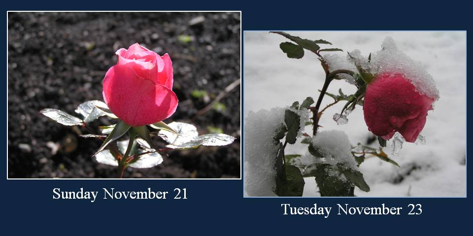First Snow Of The Season - photo by Michele Szekely