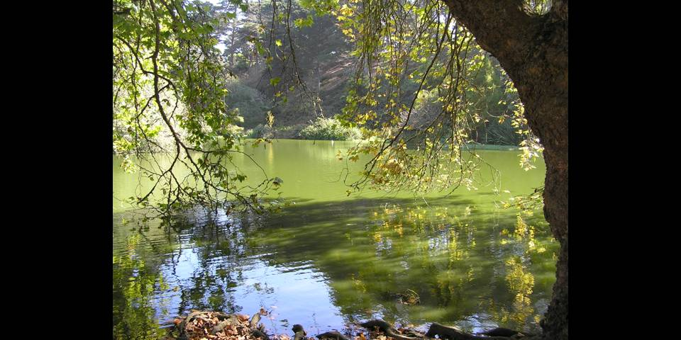 Autumn lake in Golden Gate Park - photo by Michele Szekely