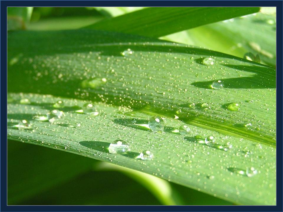 Drops of dew during Easter week - photo by Michele Szekely