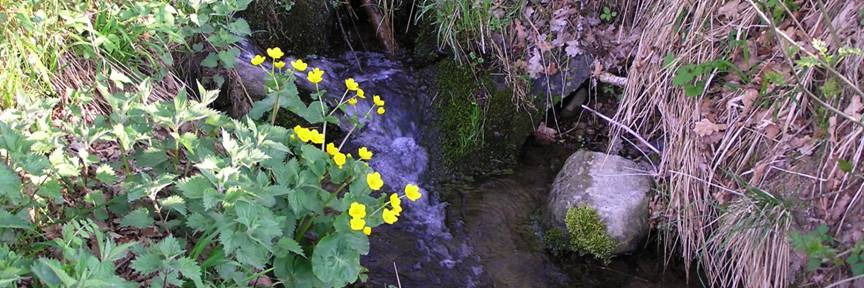 Another little mountain stream photo by Michele Szekely