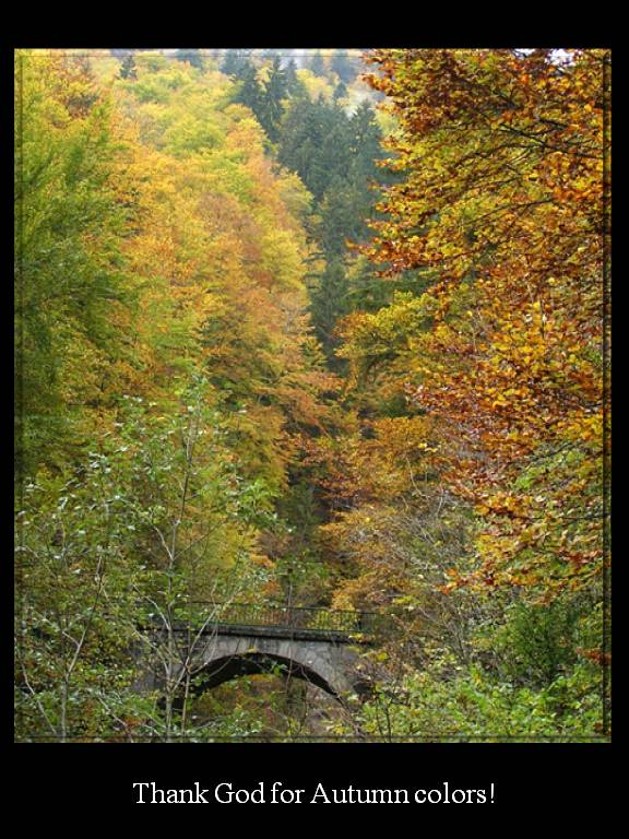 Little Bridge in Autumn photo by MichSzek